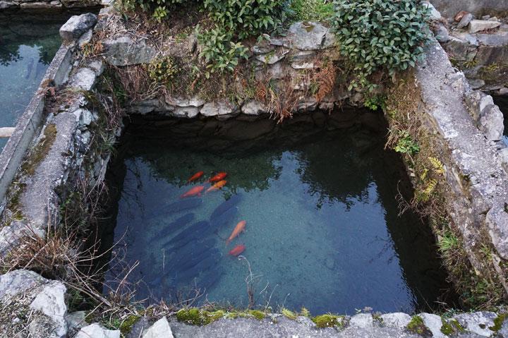 鄣山村的鱼塘