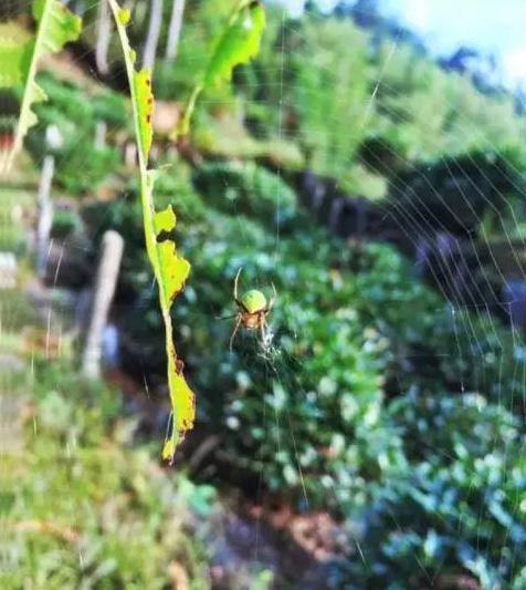 婺源鄣山村的野生昆虫